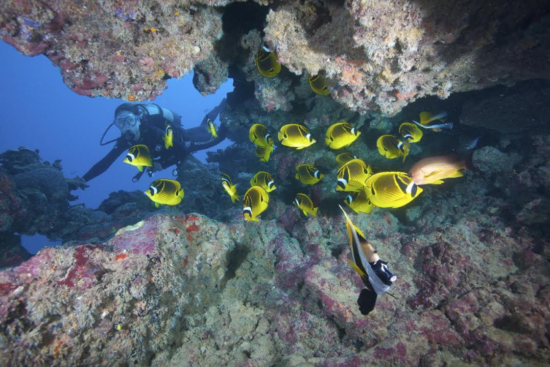 Plongée sousmarine à Rodrigues