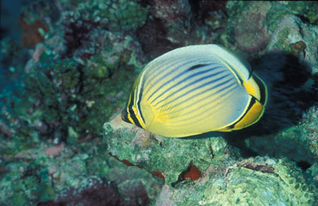 Faune sous-marine à Rodrigues