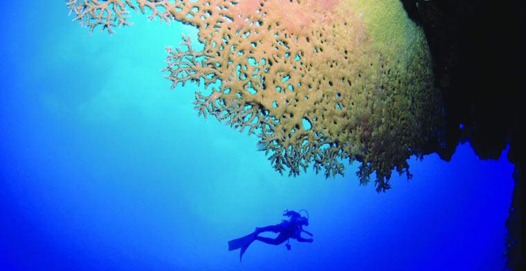 Spot de plongée à Rodrigues