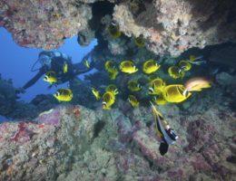plongee-rodrigues