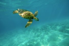spot plongée à Rodrigues