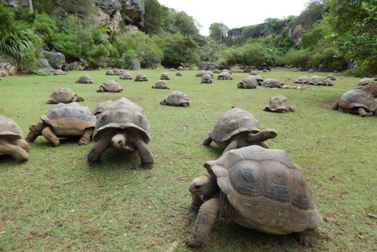 tortues rodrigues