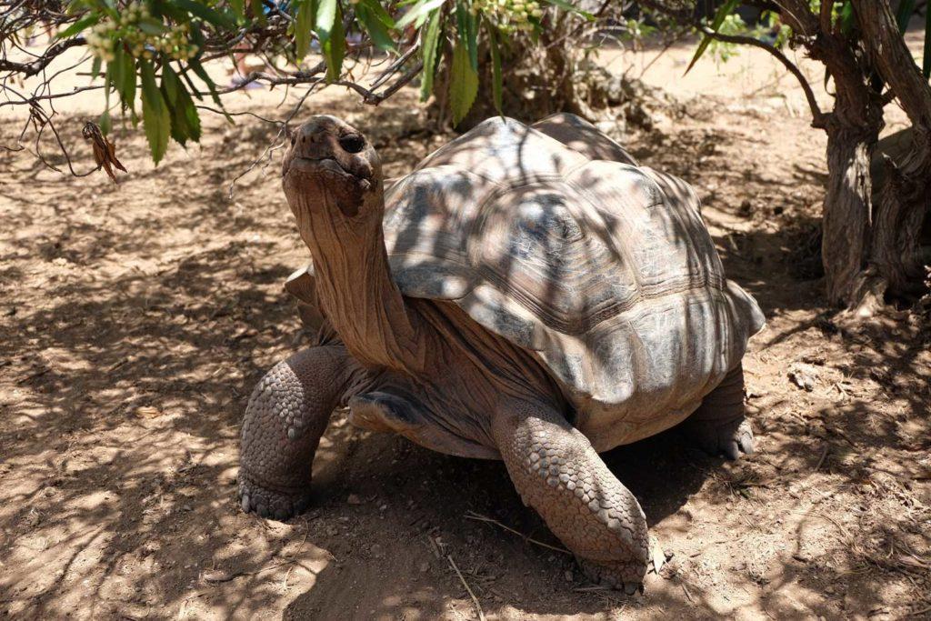jour 6 tortue